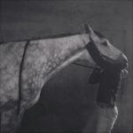 Nekstretch bij paard