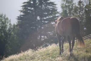 staart van jouw paard