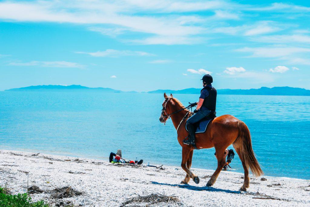 paard koel