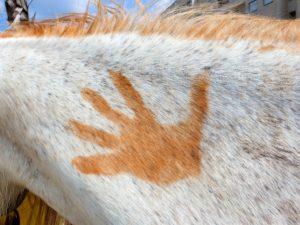 dry needling bij paarden