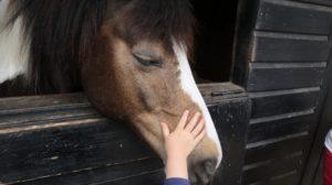 vuurwerkangst bij paarden